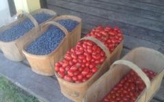 Paniers de bleuets et de tomates